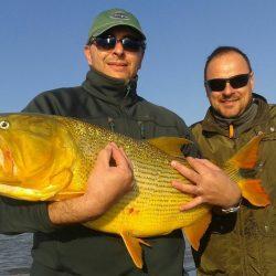 pesca-de-dorados